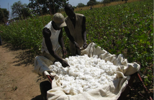 Cotton and trash seperation Burkina Faso - Image courtesy Textile Exchange